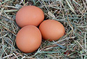 Uova contaminate in Italia
