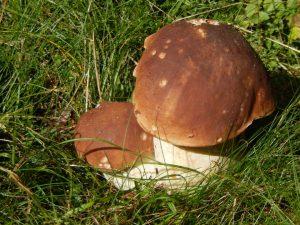 Funghi o piante